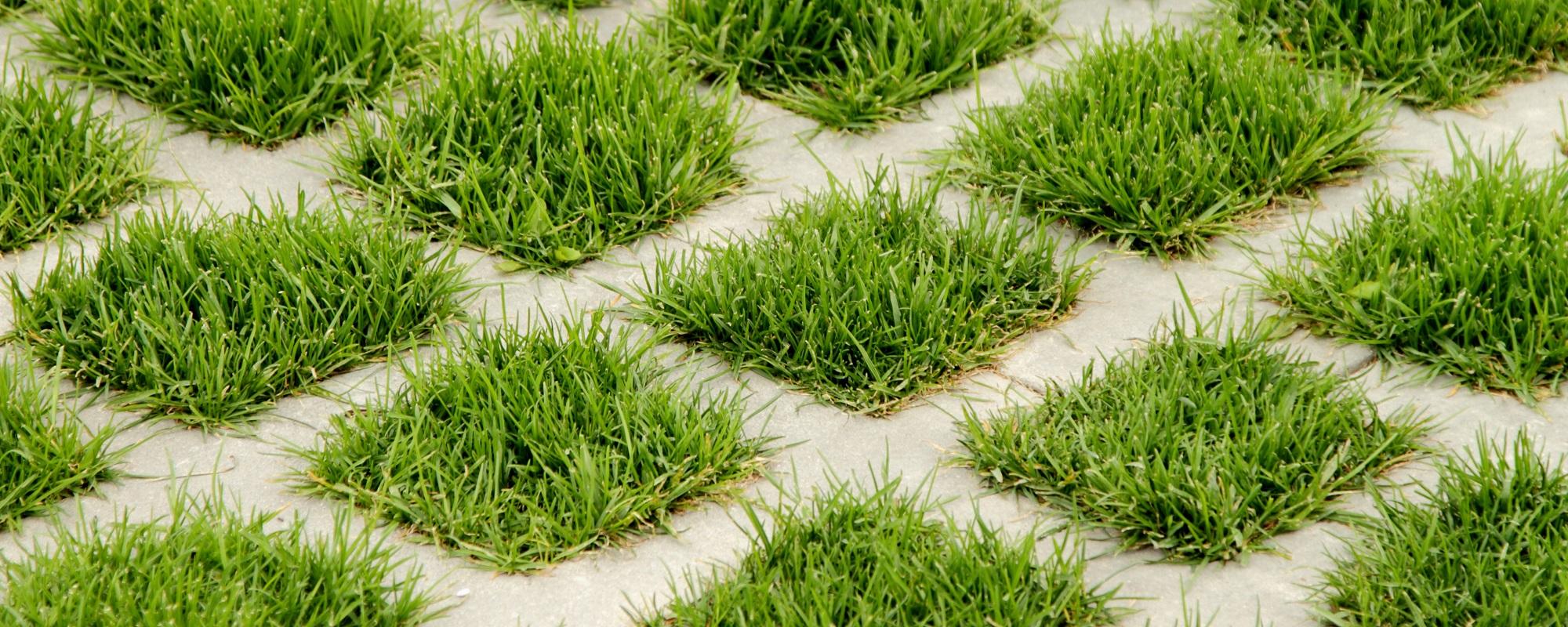 Dense green grass.